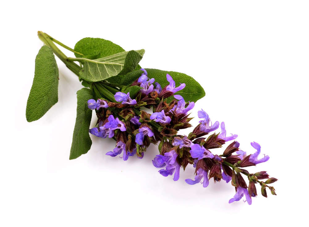 Image result for clary sage